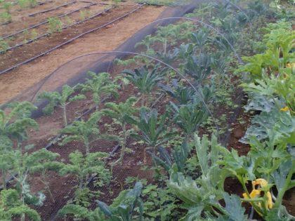 Economia colaborativa e sustentável | 14 OUT | Quinta do Priolo, São Miguel