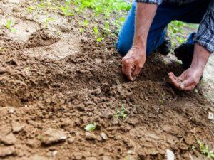 Dia Mundial do Solo: Portugal e a UE precisam de fortalecer a proteção dos solos