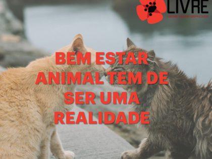 O bem-estar animal tem que ser uma realidade