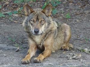 É urgente proteger a vida selvagem no mundo, na Europa e em Portugal